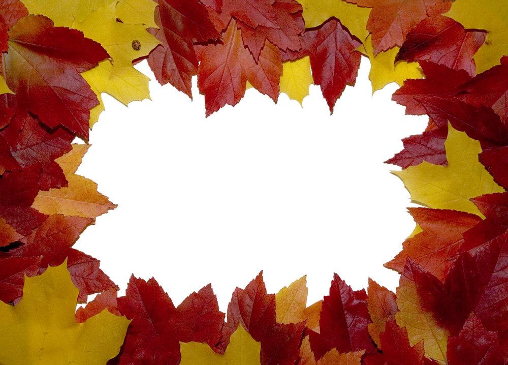 leaf-boarder-1408205.jpg