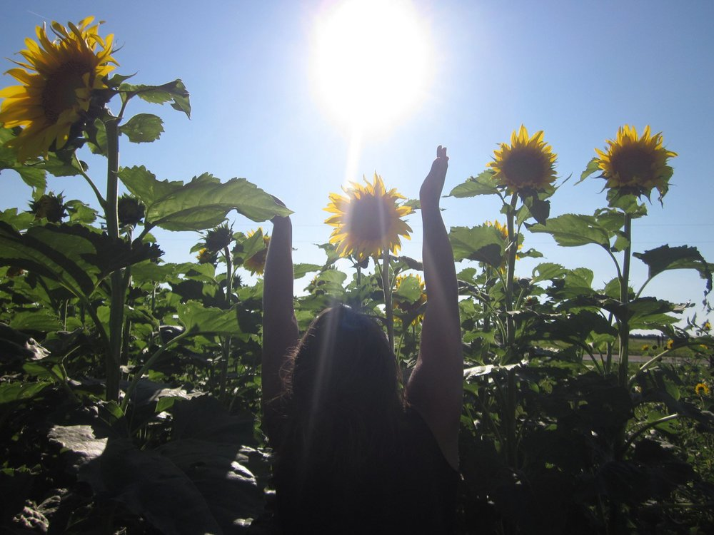 Rejoicing in a field of sunflowers
