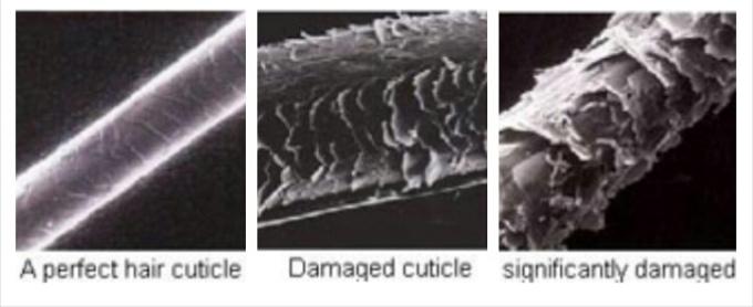 cuticle.jpg
