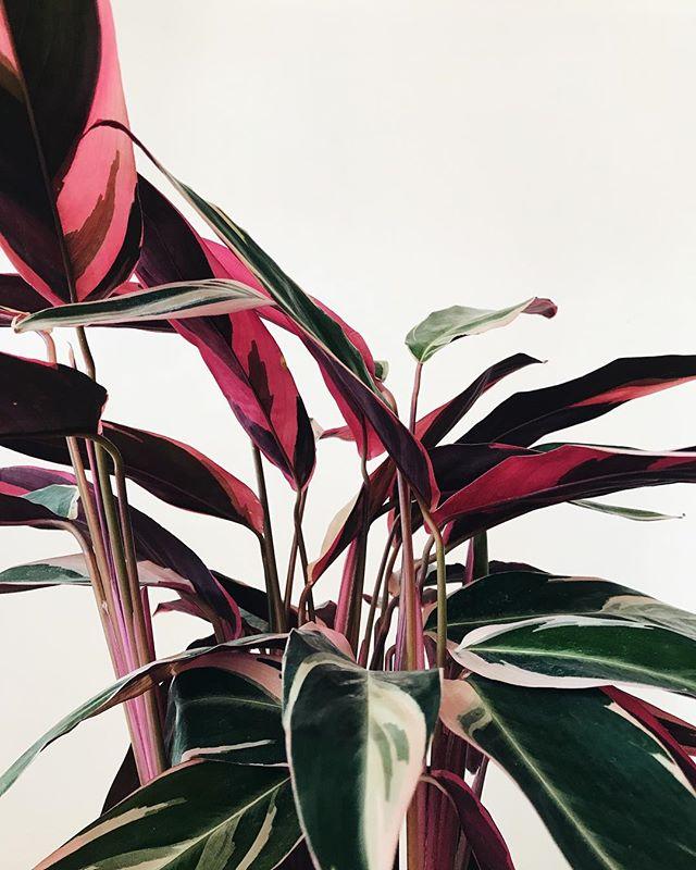 Un beau feuillage coloré, ça rend de bonne humeur! Le fait que c'est vendredi aide aussi 🌸 • Colorful leaves sure put us in a good mood! The fact that it's Friday does help too 🌸