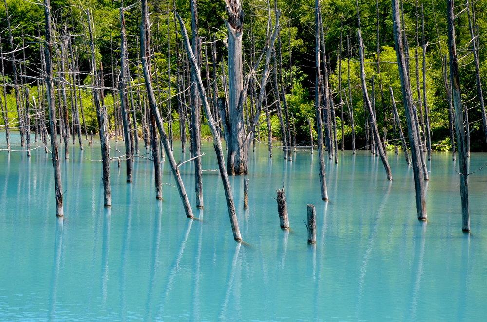 美瑛町の外れの方にある「青い池」も魅力的です。