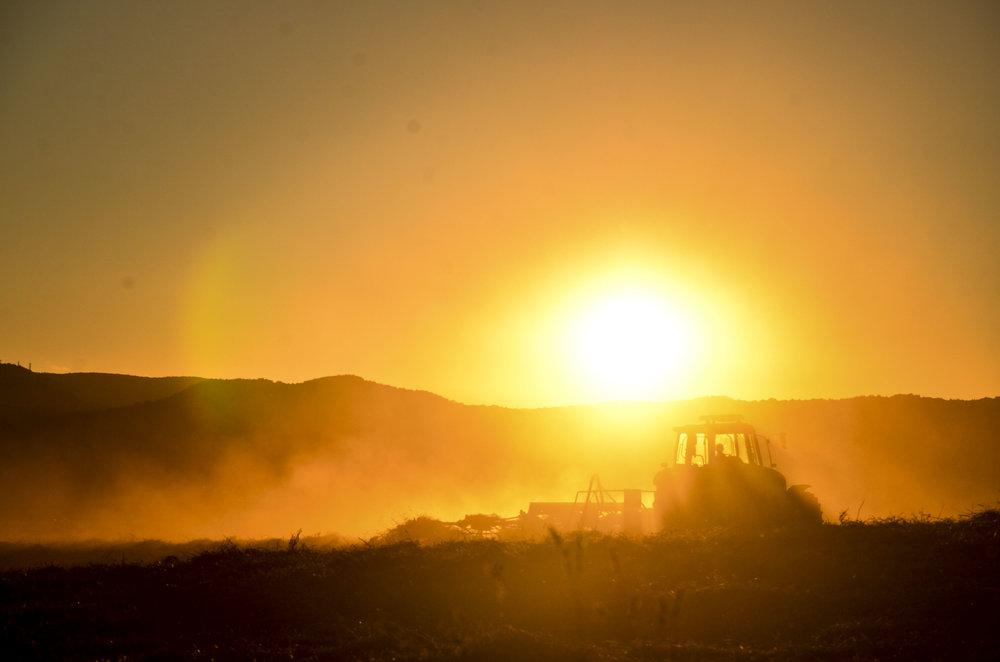 夕暮れ時の砂を巻き上げるトラクターはカッコよかったです。   土を耕しながら、何を考えているのでしょう。