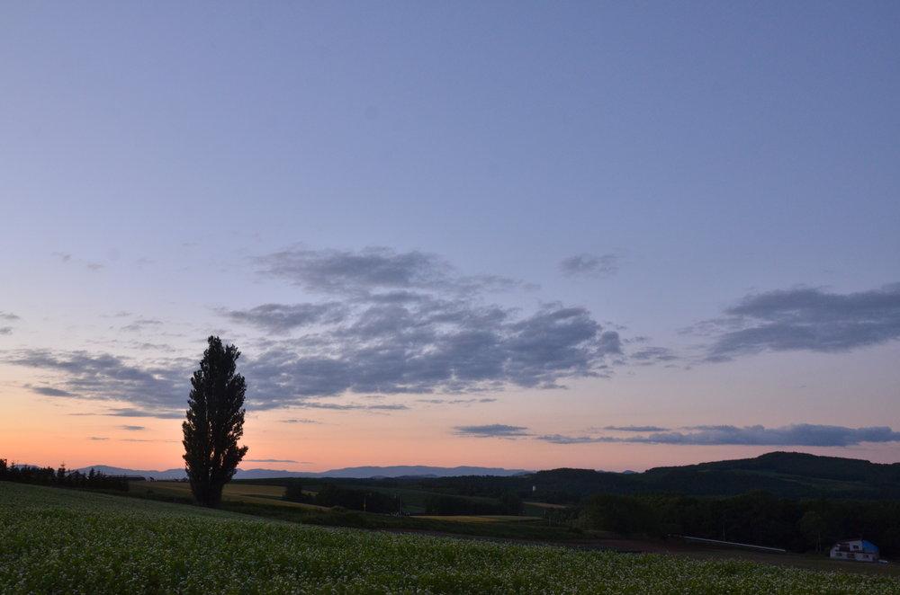 (ケンとメリーの木)  丘の上に立つ木が、赤く焼けた空との相性抜群です。