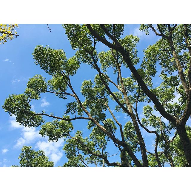 If you were a tree, what tree would you be? 🌴🌳🌲🌿🍃#fukuoka #japan