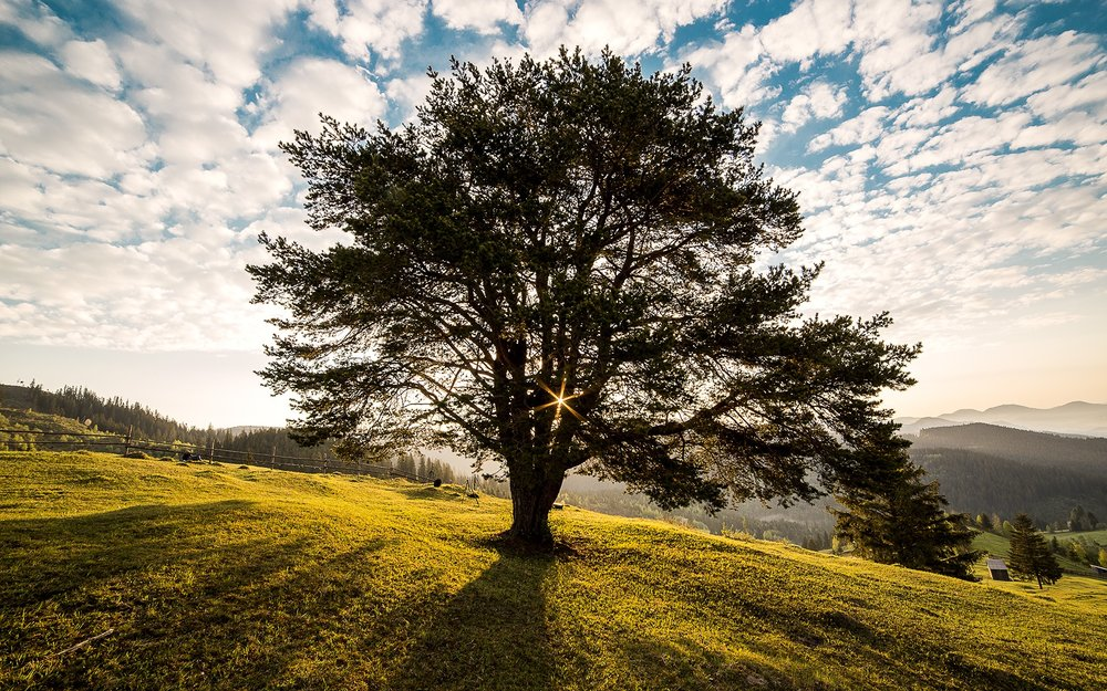 tree-dawn-nature-bucovina-56875.jpeg