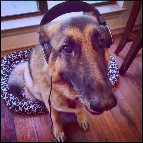 Contact Pets with Passports - While we can't promise that Buggi the German Shepherd will answer your call, we would love to hear from you.PETS WITH PASSPORTS Call Elaine at 512-676-0626 Call Sarah at 269-370-4481Are you outside of the Continental US? Call either Elaine or Sarah during business hours CST.