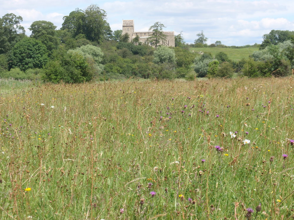 Achurch Meadow SSSI Heather Procter.JPG