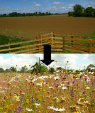 The effects of meadow restoration