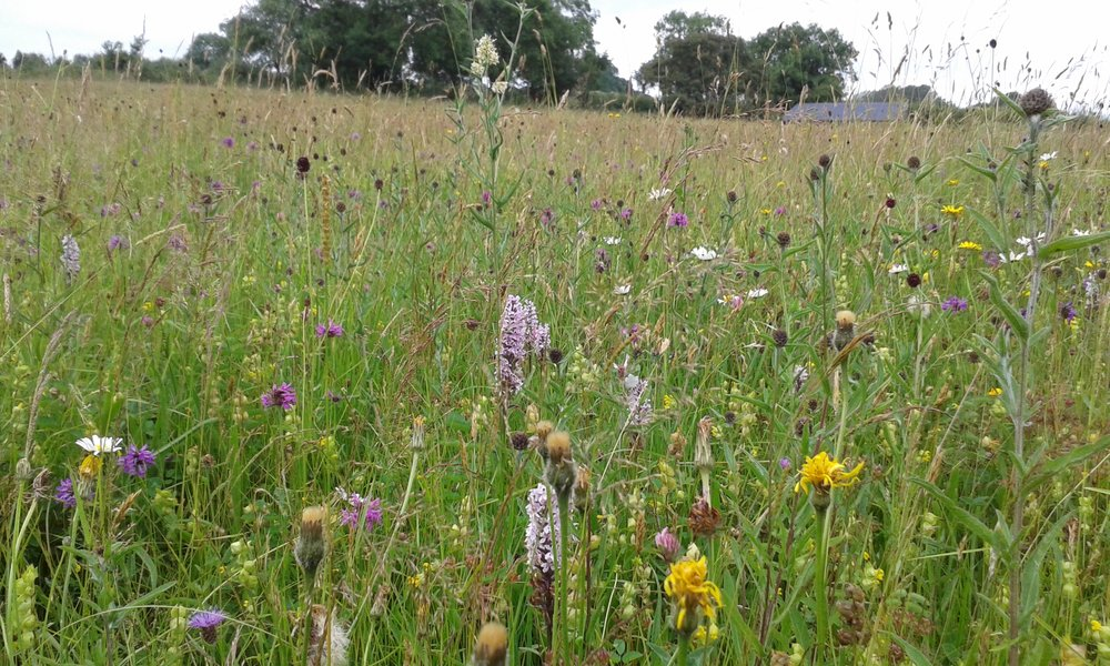 Grants are available for wildflower meadow improvements