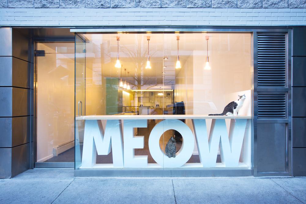 Sonya Lee Architect_MeowParlour_Storefront.jpg
