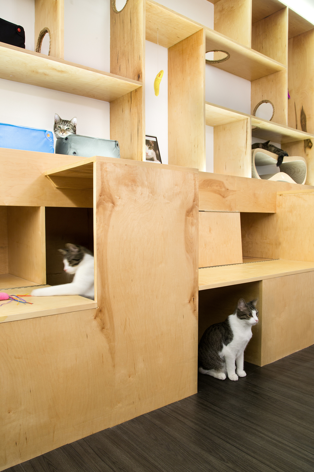 Sonya Lee Architect MeowParlour_Shelving_dtl.jpg