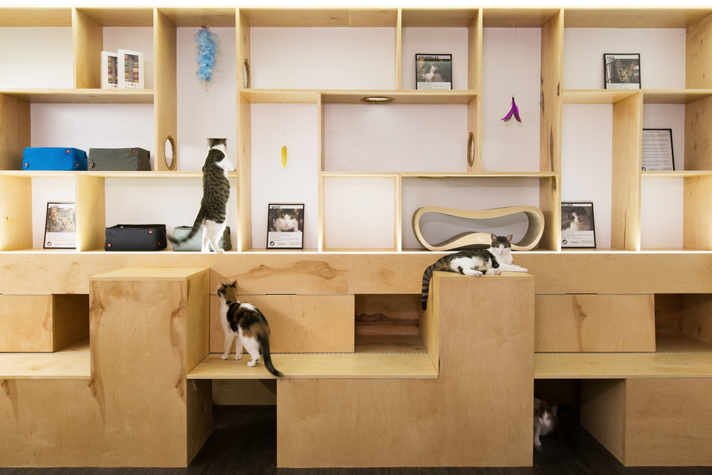 Sonya Lee Architect_ MeowParlour_Shelving elev.jpg