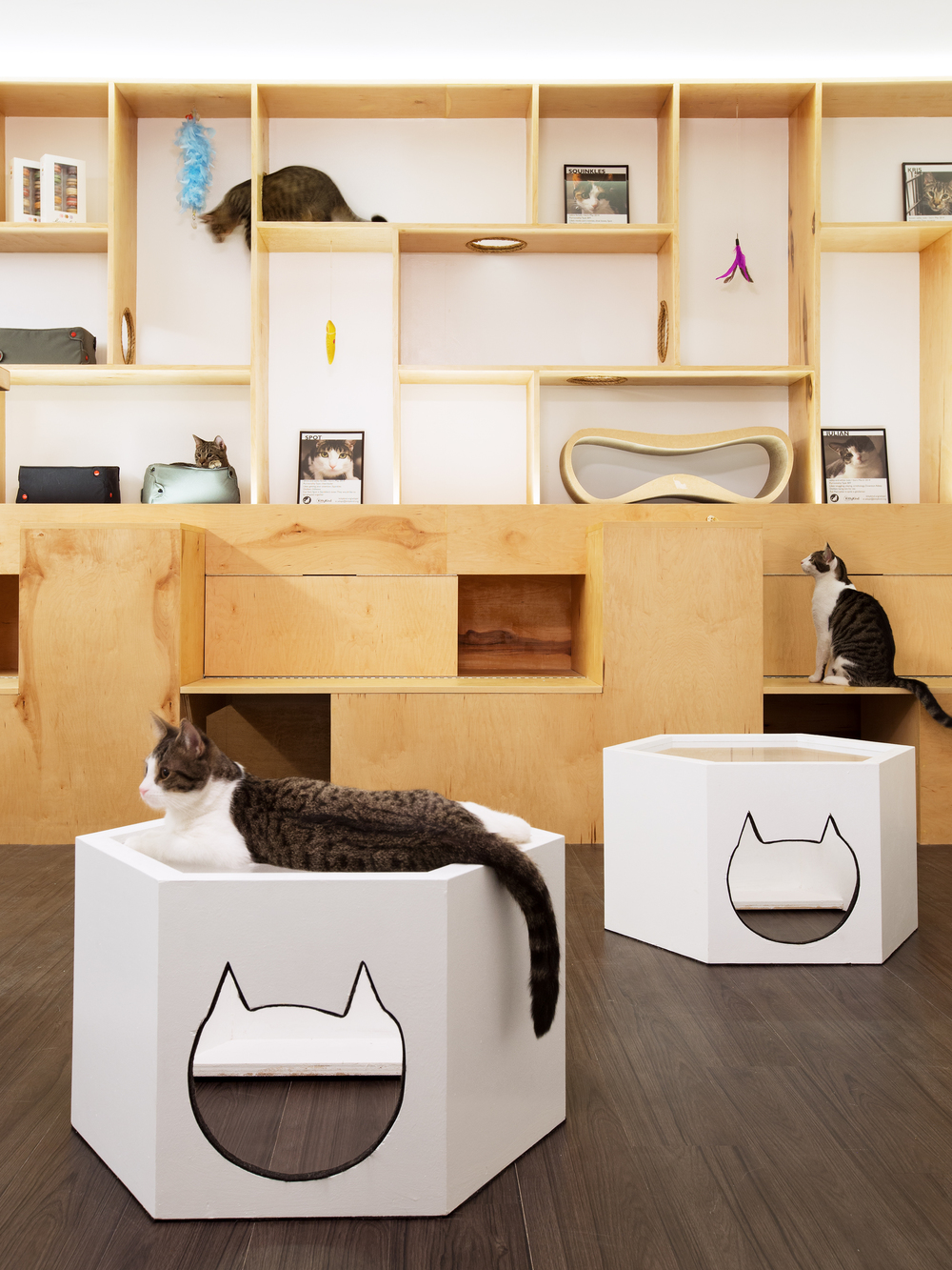 Sonya Lee Architect MeowParlour_Shelving detail.jpg