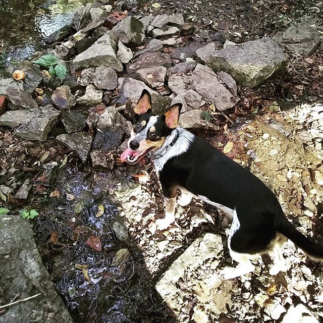 Scouting for crawdads #creekdog
