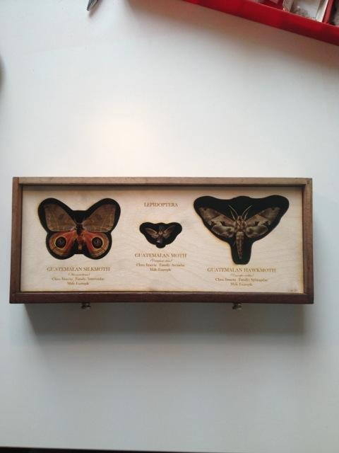 Cabinet-moths.jpeg