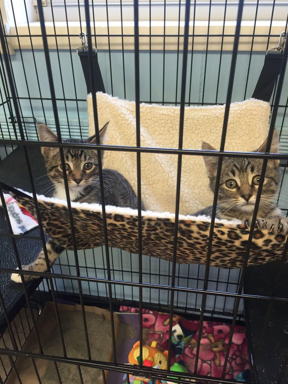APL_Kittens.jpg