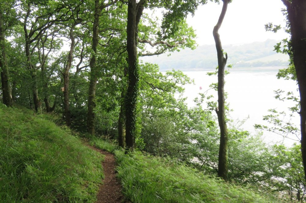 good woodland with wter views CROP.jpg