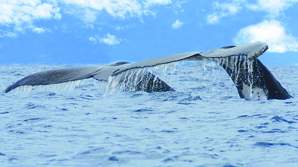 Whale watching. 2014, Revista Apetito.