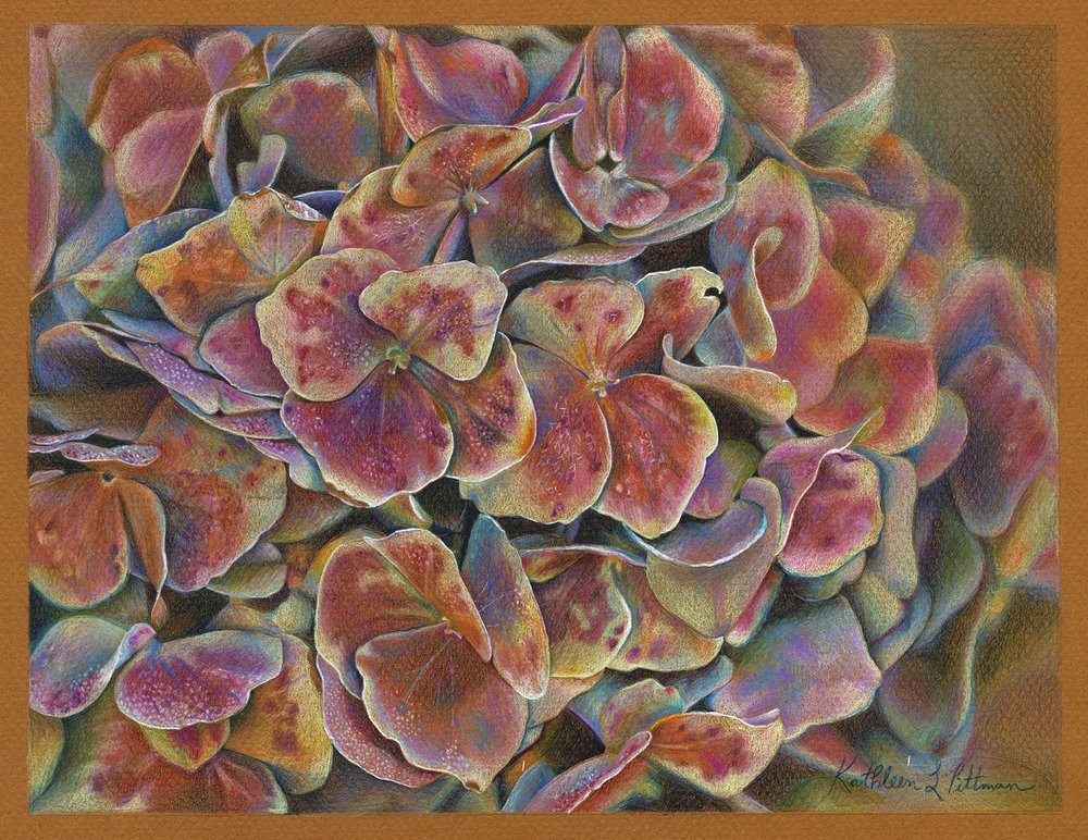 Opalescent Hydrangea