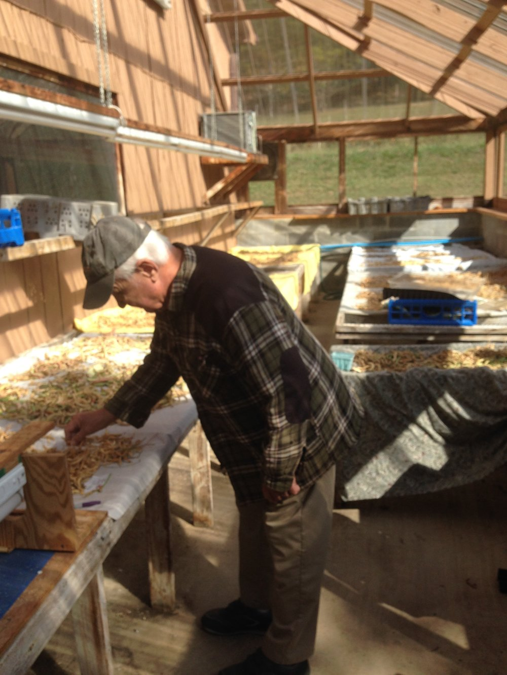 Bill Best demonstrates the process for drying beans. In October, he's deep into this process.