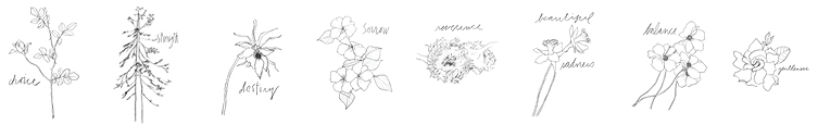 While drawing these plants in a 100 day practice in 2015, I realized how much we are like them. Though we live in a different way, a different form and timescale, we are the roses, the daffodils, the redwood trees and the gardenia -- we are the choices we make, we are beautiful sadness, we are strength, we are gentleness. We are all these things and more when we make the time to notice.  I've always felt these flowers are like warrior messengers. My hope is that each of the drawings will remind those who encounter them that they can find the same beauty and power embodied in these plants within themselves.