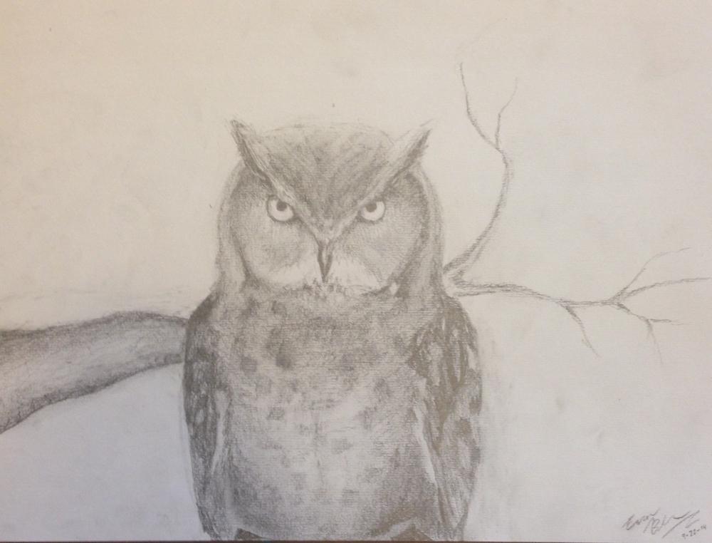 Owl, 2014