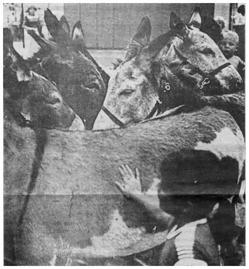 Donkey Contest 2.jpg