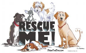 RescueDog.jpg