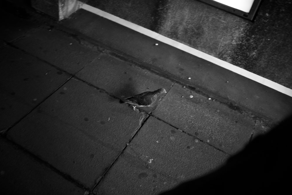 black and white photo of pigeon in an urban london street