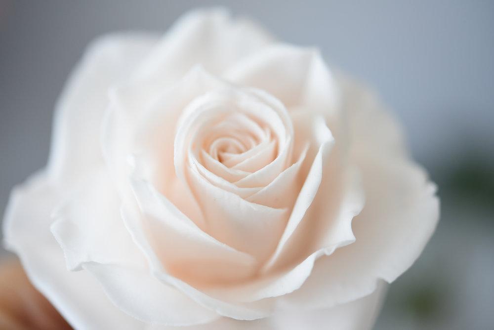 avalanche rose