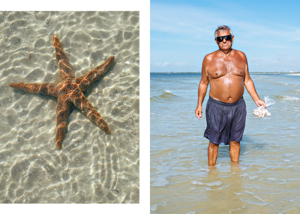 Shells and Starfish.jpg
