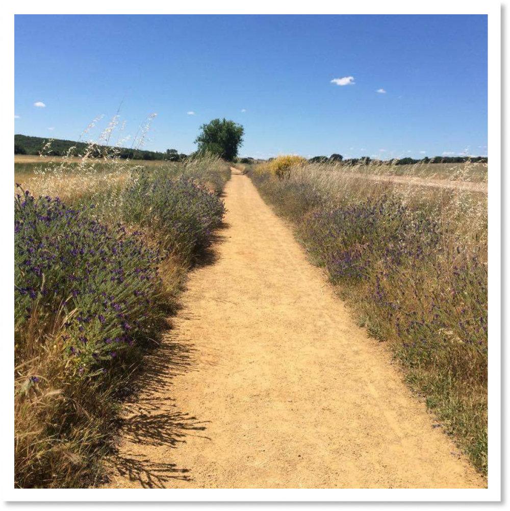 Pilgrim's Way.jpg