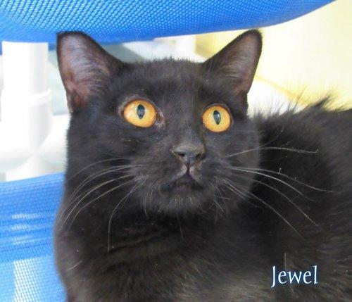Jewel.jpg