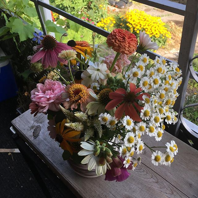 "Cut some flowers as the weather started to cool yesterday and let them rest and take up water. Today's the day to arrange but I kind of like how they're looking all together! Reminds me of something my uncle Dan would say, ""leave'r lay where Jesus flang'r."""