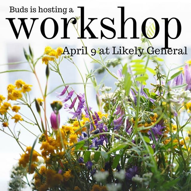 🌹 Excited to spread the news that I'll be hosting a workshop on April 9, from 7-9pm. 💐 I've ordered the seeds and started the plants I'll be sharing with participants, who will also recieve a roadmap to planting their own cutting garden. I've put a link in my bio! 🌱