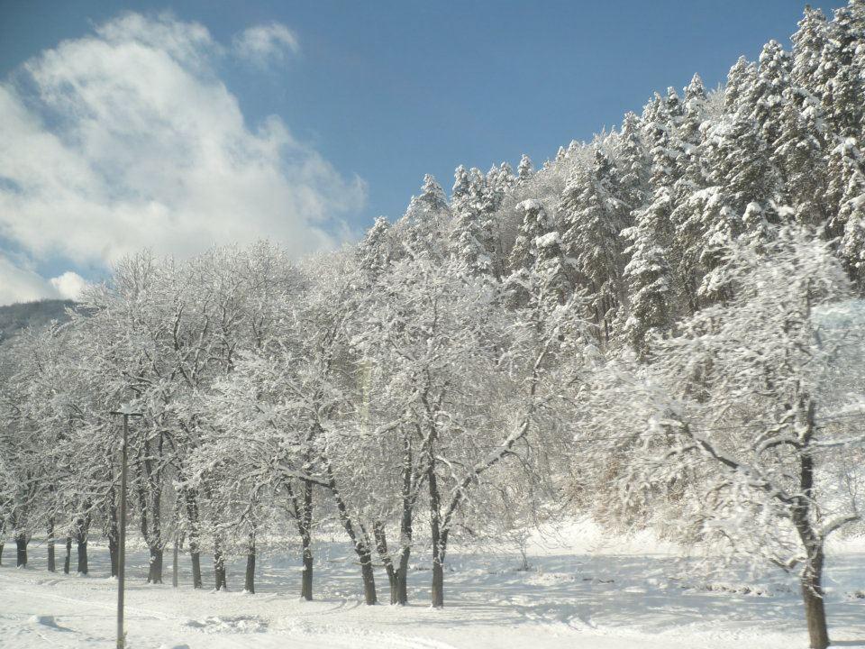 Predeal - Winter Landscape.jpg