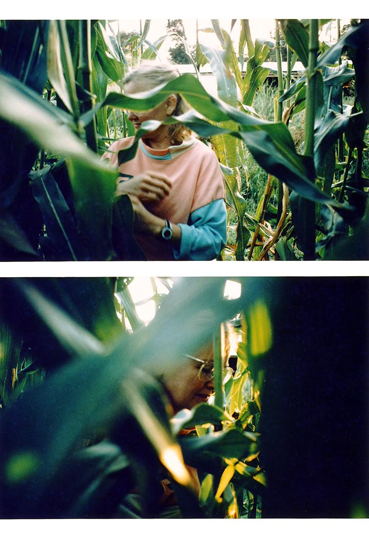 T1_136_pk154 94 B6.25 0005_phyllis prepped dscans pt2.2_2pt in cornstalks_Lg.jpg