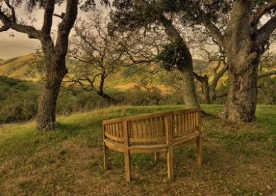 IONS-bench (1).jpg