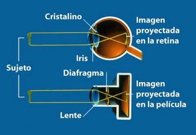 La lente de una cámara capta la imagen con los mismo principios que el ojo humano