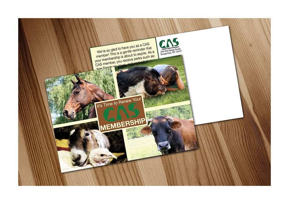 Catskill Animal Sanctuary Postcard