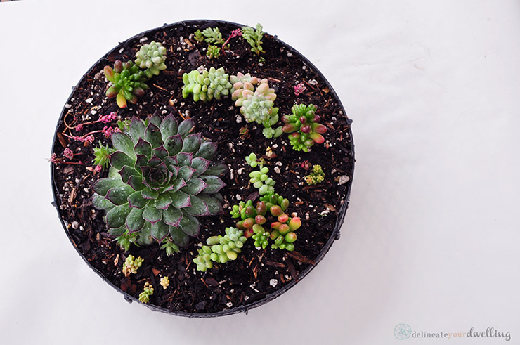 5-succulent-table