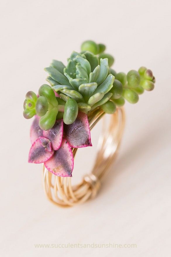 Make-a-gorgeous-ring-using-living-succulents-585x878