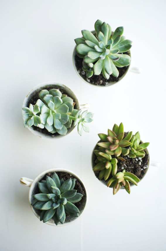 succulents___love_lola_large_jpg