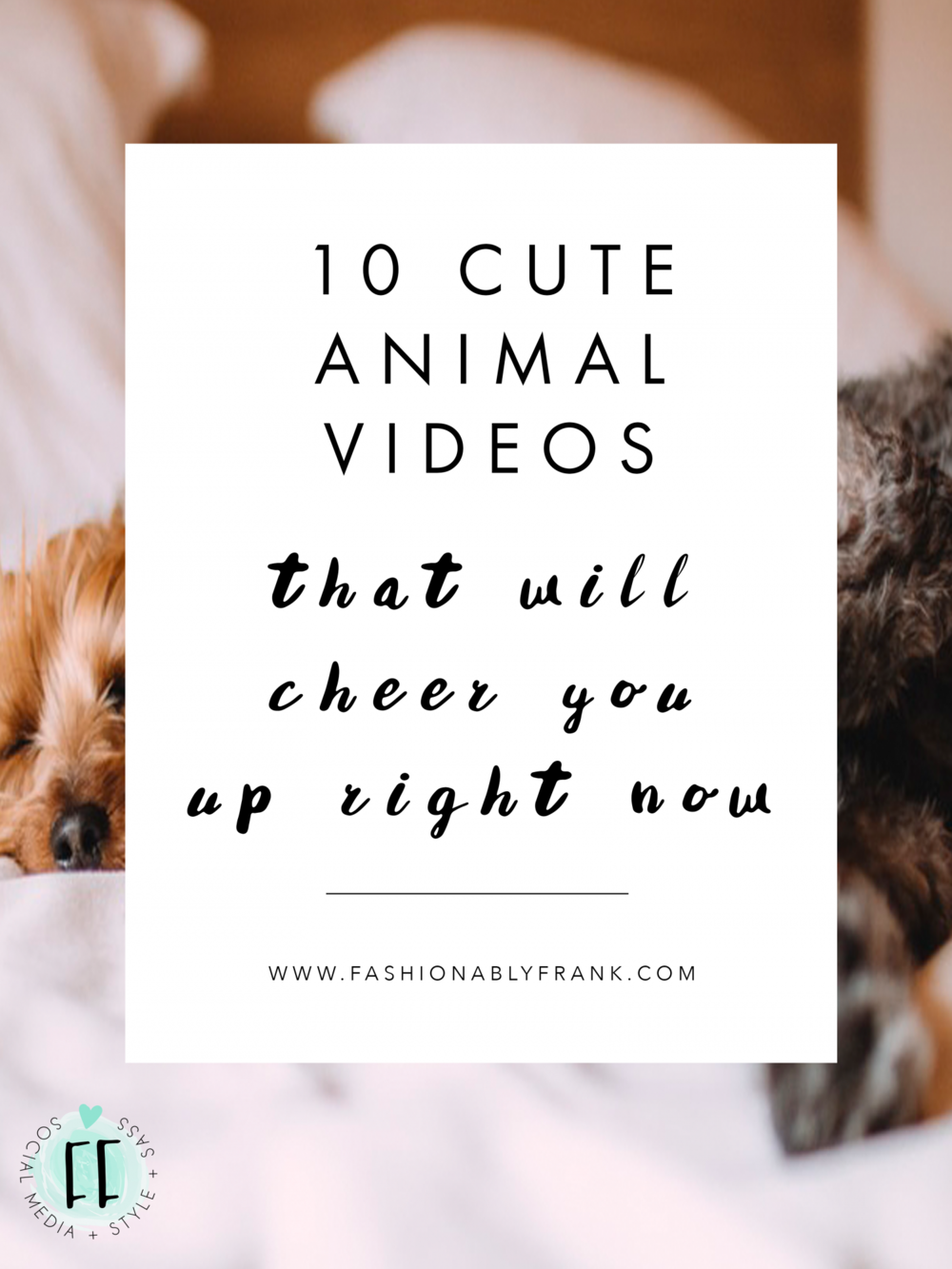 10 Cute Animal Videos That Will Cheer You Up Right Now | Fashionably Frank