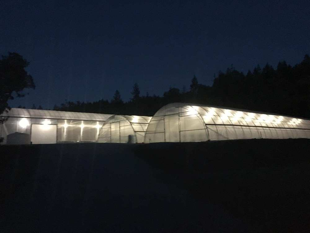 Copy of light deo greenhouse at night