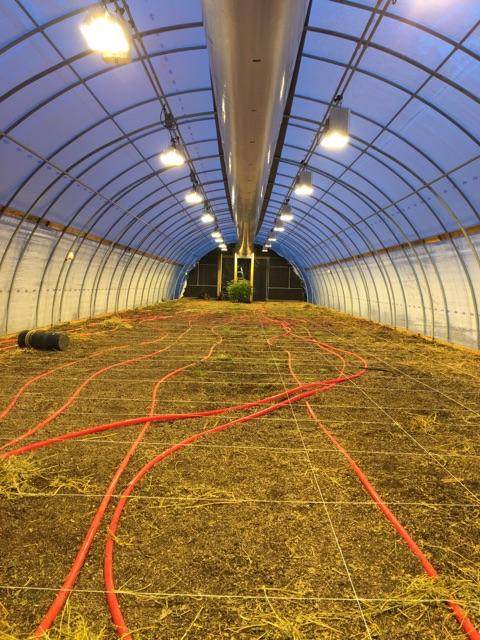 light deprivation greenhouse before replant.jpg