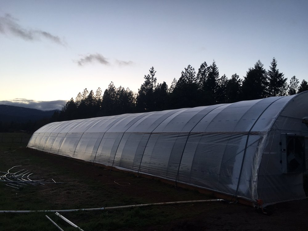 light dep greenhouse with clear cover.jpg