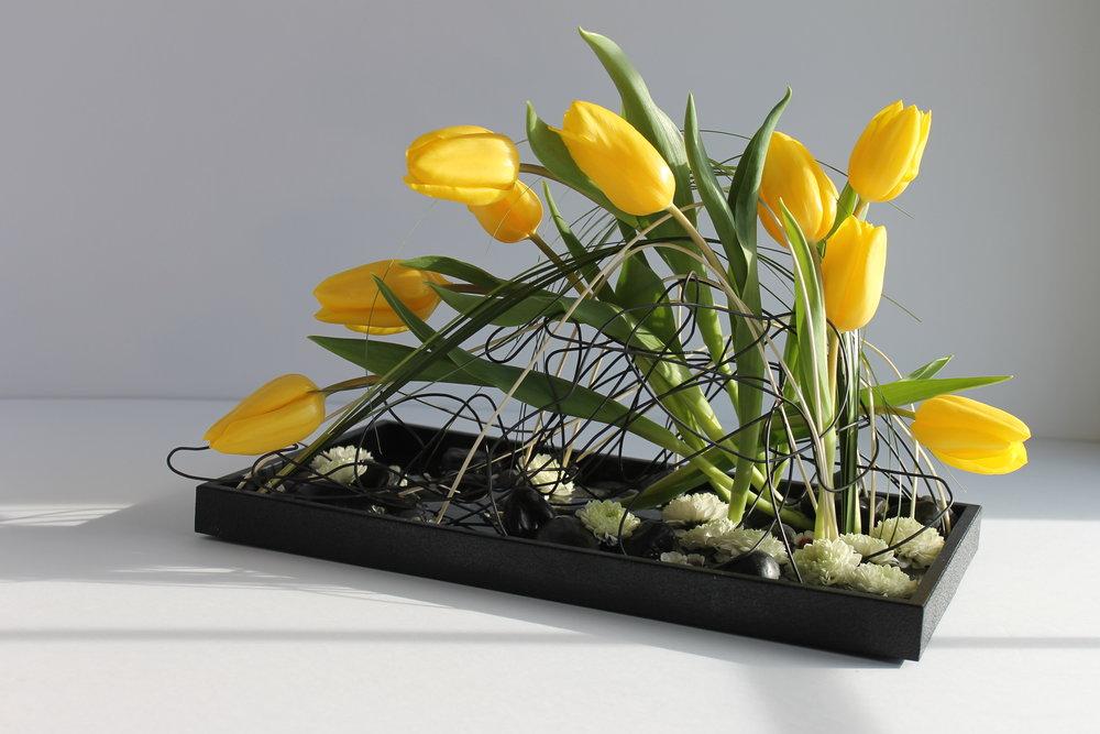 Tulip Dance promo photo.jpg
