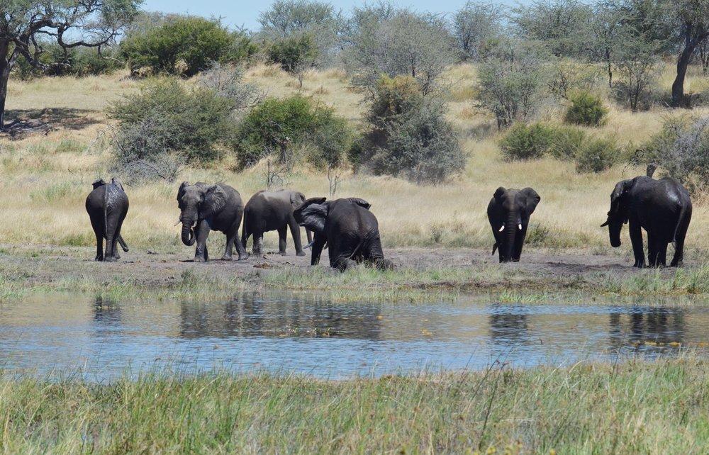 Africa2017_123.jpg