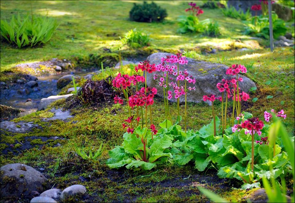 littleflowers_EmeritaWheeling.jpg